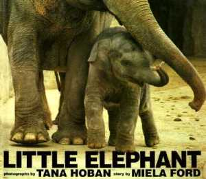 Little Elephant by Ford