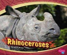 Mattern-Rhinoceroses